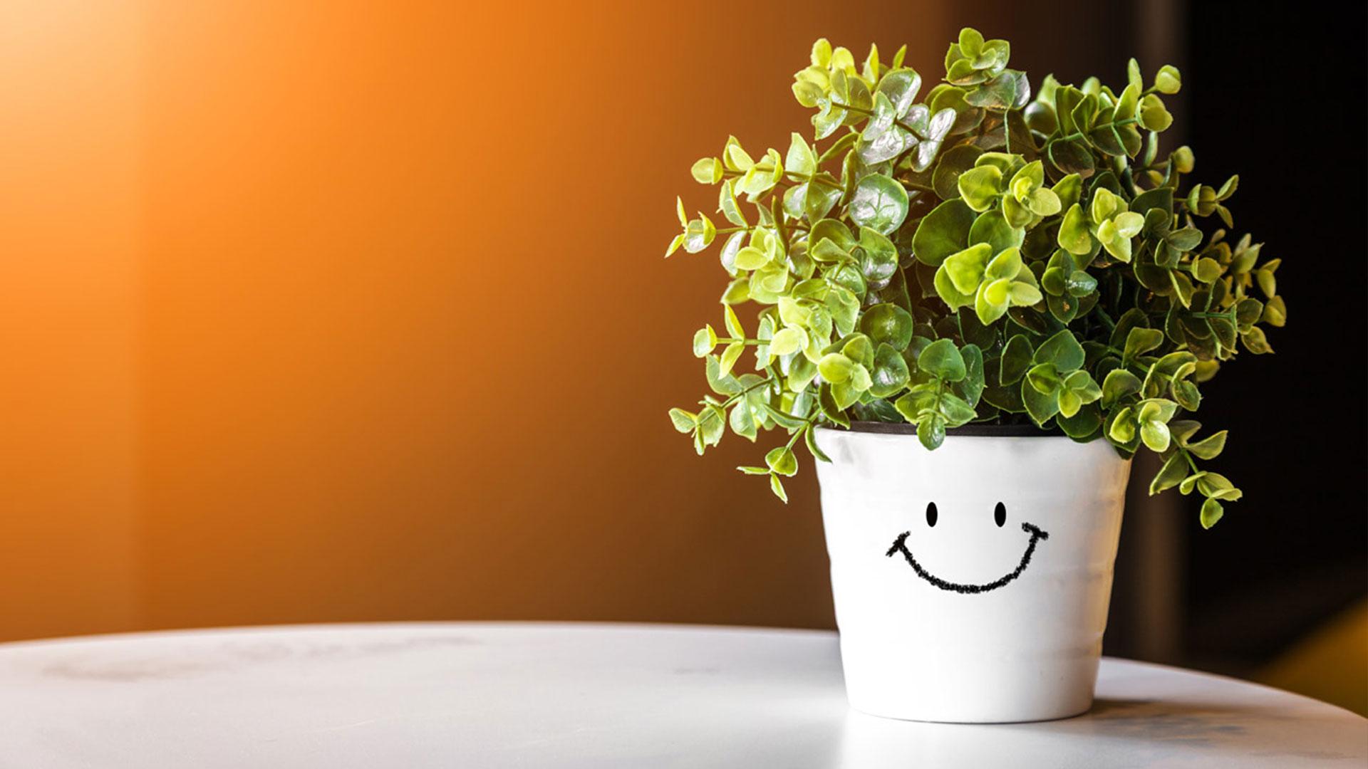 International Bloemen, unul dintre principalii furnizori de flori, plante și aranjamente florale pentru retail, lansează o gamă nouă de ghivece